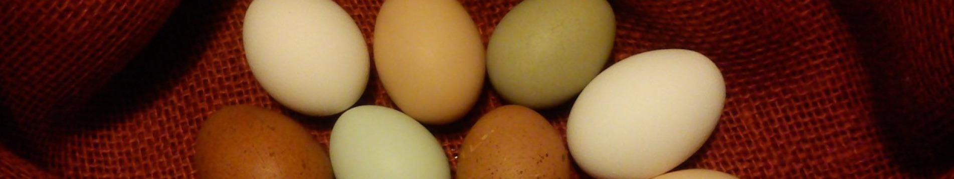 Hühnerhof Juesven Hobby-Hühnerhaltung mit Herz