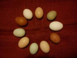 bunte Eier vom Hof
