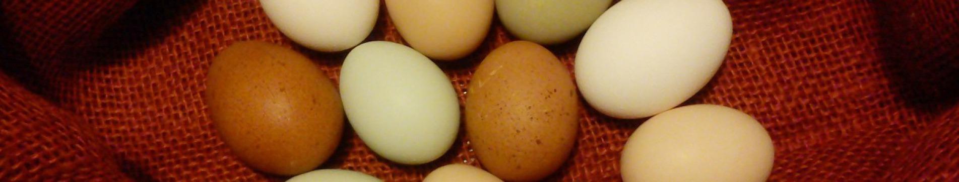 Huehnerhof Juesven - Hühnervideos