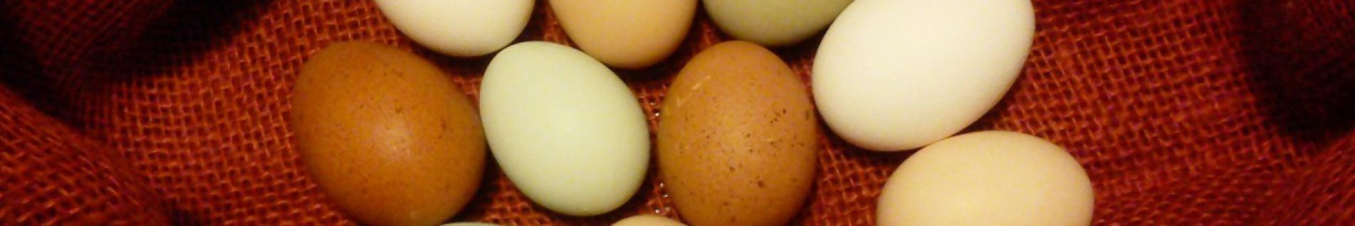 Hühnerhof Juesven